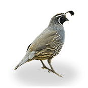 site favicon quail senior care home